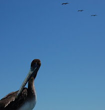 Photo: bird is the word
