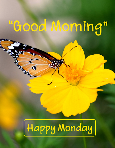 Top Good Morning Monday Yellow Images Hd Greetings Images