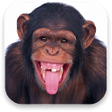 3D Monkey Live Wallpaper icon