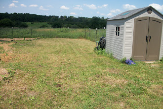 Photo: Our dear little lawn and shed