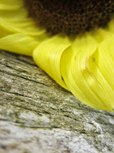 Photo: Yellow sunflower petals laying on an old, wooden fence at Cox Arboretum in Dayton, Ohio.