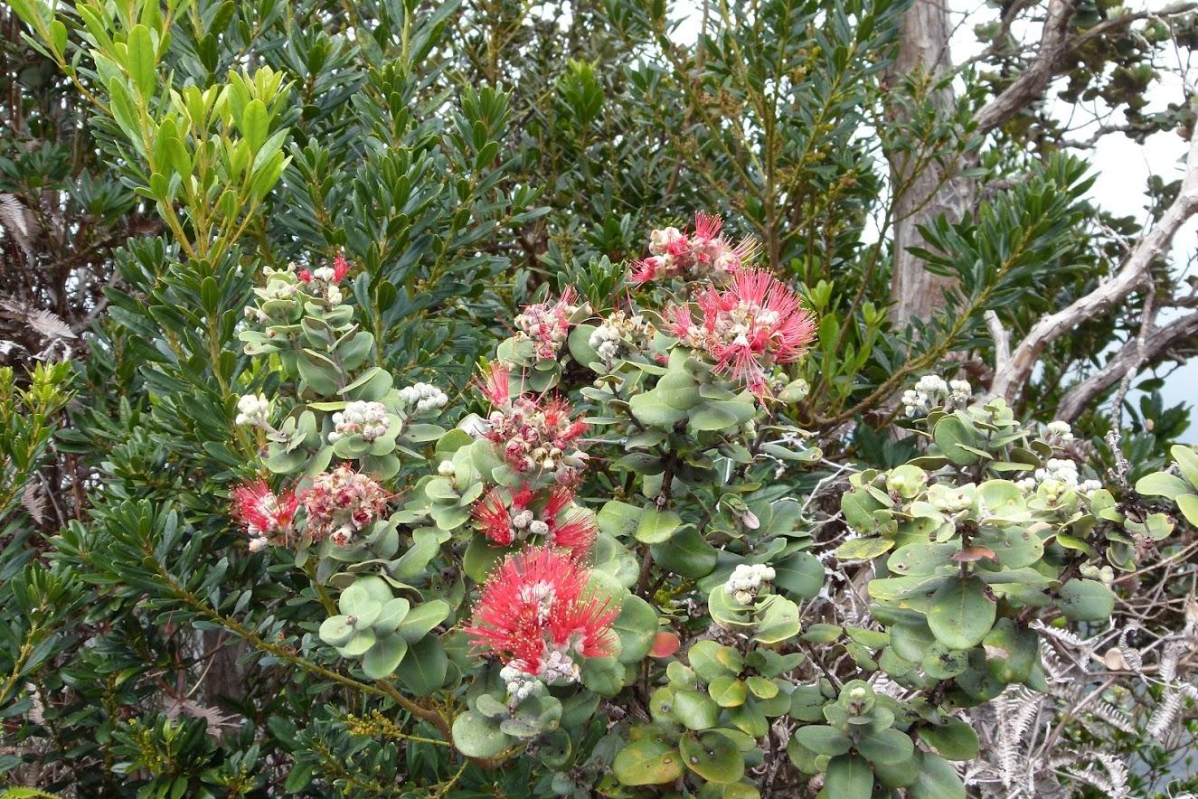 Adaptive plants