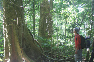 Photo: Tree in Nam Ha NPA-3 Days Nam Ha Jungle Camp in Luang Namtha, Laos