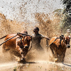 cow by Taufik T KamaMoto - Sports & Fitness Rodeo/Bull Riding