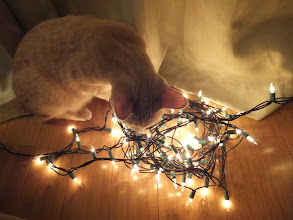 Photo: Finley helps untangle the lights.