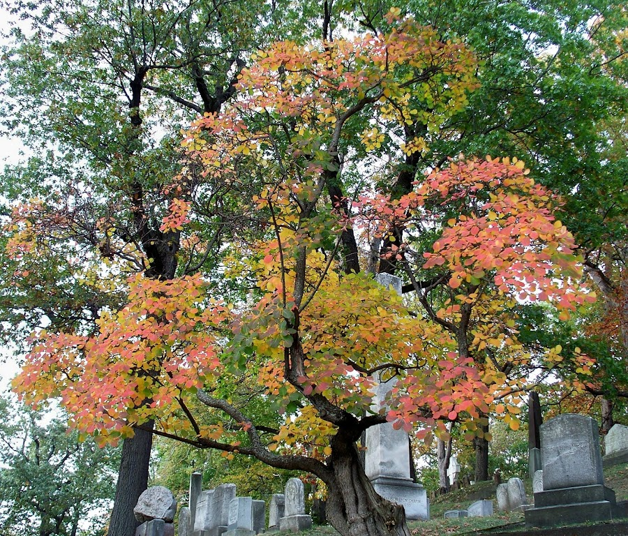 by RMC Rochester - City,  Street & Park  Cemeteries ( nature, colorful, fall, cemetery,  )