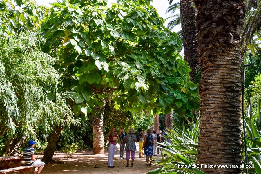 Тропический сад в Тель-Авиве. Экскурсия в Тель-Авиве гида Светланы Фиалковой.