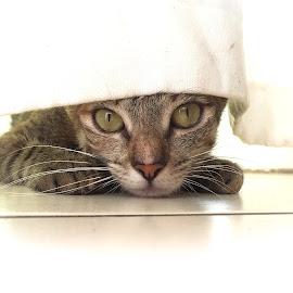 by Natasha Brits - Animals - Cats Portraits (  )
