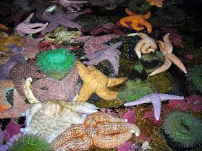 Photo: Sea Stars, Oregon Coast Aquarium, Newport