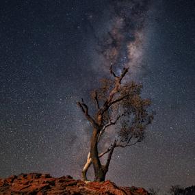 Tree Under Milky way by Greg Tennant - Landscapes Starscapes ( tree, rocks, milky way,  )