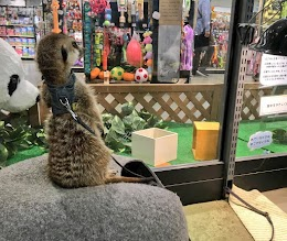 もふもふふれあい動物園 イオンモールつくば店