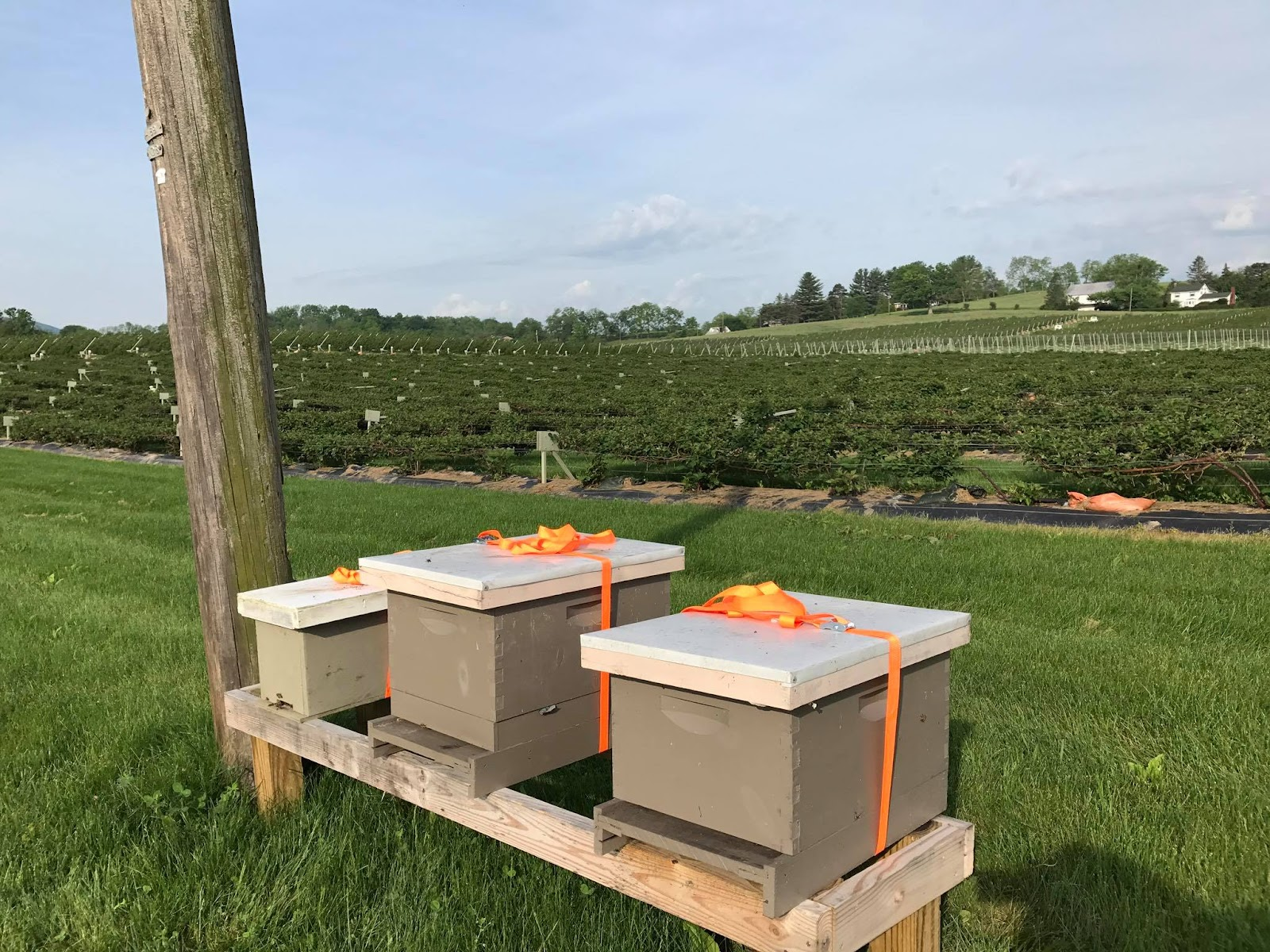 Huckle Bee Farms bee hives