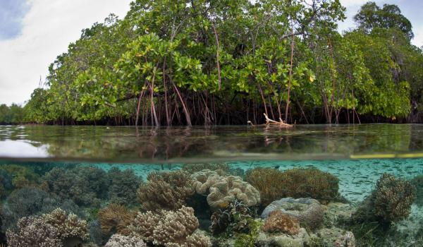 Kenya-mangroves