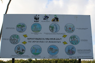 Photo: Signboard to educate both visitors and locals on the importance of the mangroves