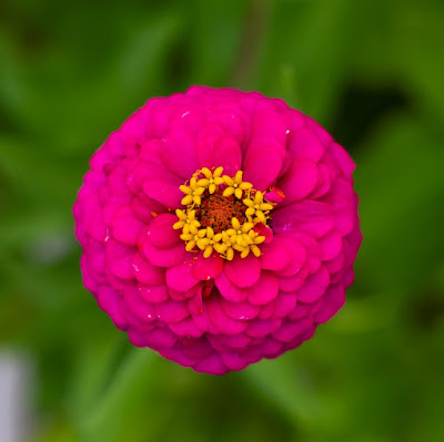Flower di Matteo90