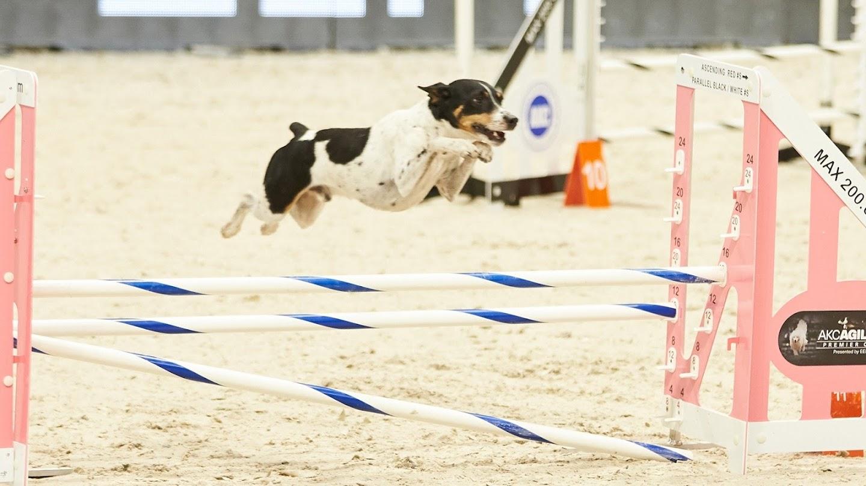 Watch World of Dog Sports live