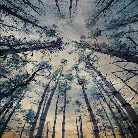 by T. Lee Kindy - Landscapes Forests
