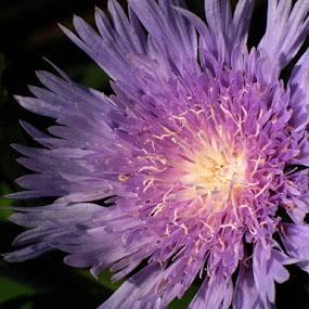 by Subramanya Padubidri - Nature Up Close Flowers - 2011-2013