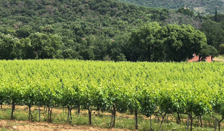 Vignoble Saint-Tropez