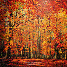 Photo: Décidément cette année l'automne m'éclate et vice versa !  Effet Orton : http://bit.ly/bHD4NO Textures : http://bit.ly/pesqFL ebook : http://bit.ly/qeKC2E  And please share this with your circles if you find it interesting. Enjoy ;-)