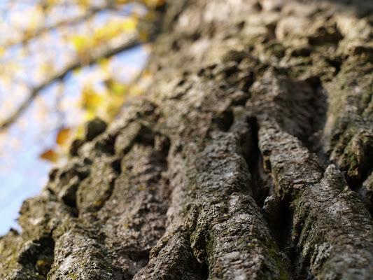 albero di significato66