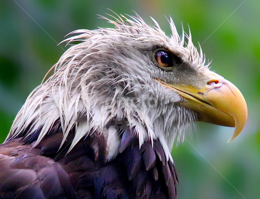 Rainy Day Raptor by John Larson - Animals Birds