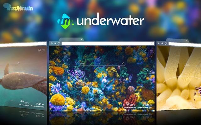 Wildlife Underwater HD Wallpapers New Tab