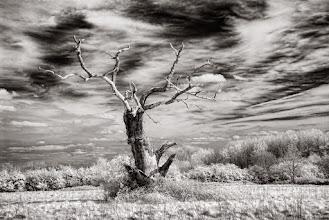 Photo: The Flailing Tree