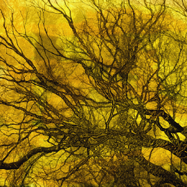 Tree with Golden Light by Edward Gold - Digital Art Things ( yellow background, digital photography, golden background, silhouette, silhouette of  tree, digital art,  )