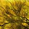 orange texture copy1.jpg