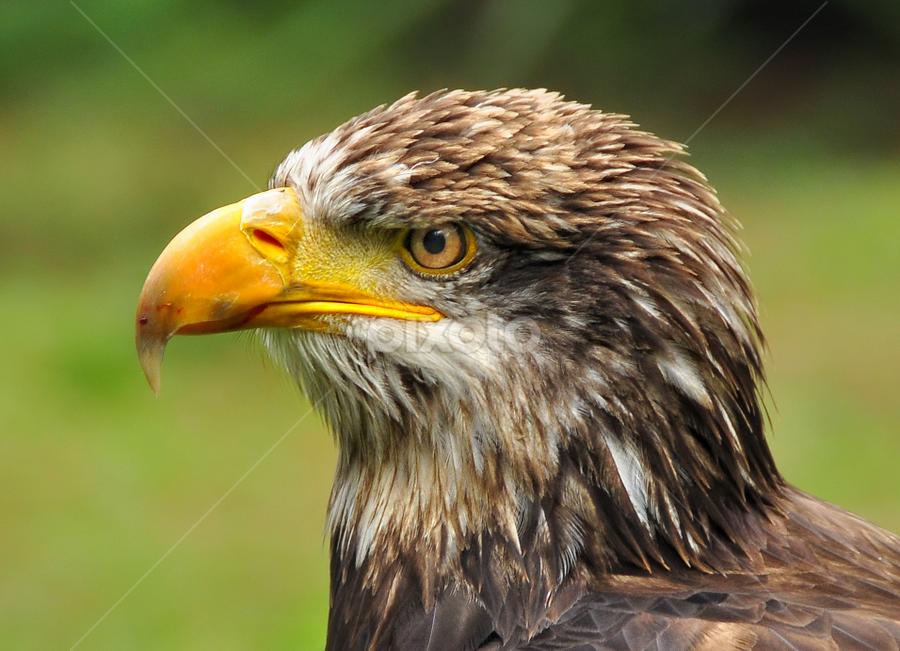 by Elang Wahyudi - Animals Birds