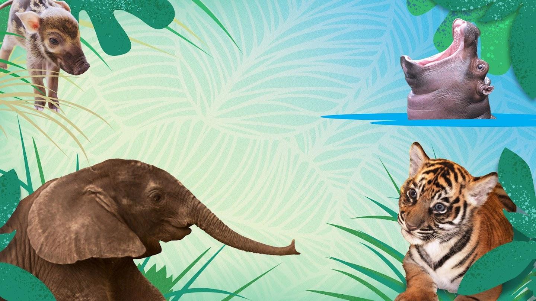 Watch Disney Animals live
