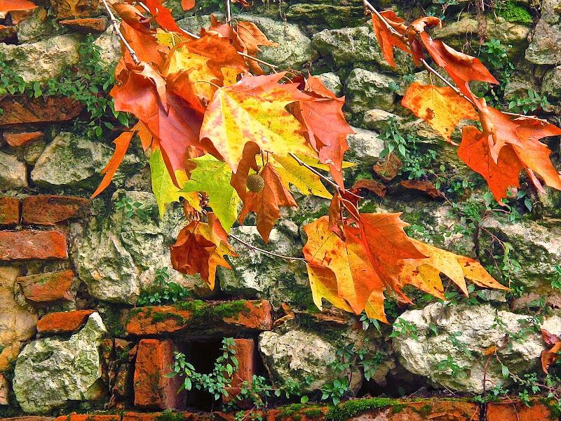 Il muro e le foglie. di sangiopanza