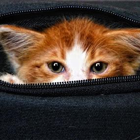 Hai... by Azman Jaeh - Animals - Cats Kittens ( #GARYFONGPETS, #SHOWUSYOURPETS )