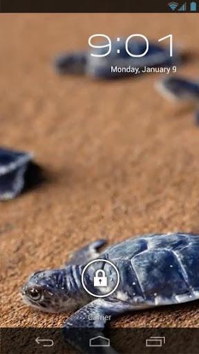 Little Sea Turtles Live Wallp
