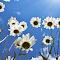 underside flowers (11).JPG