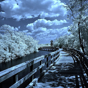 The Watch Tower by Jeremy Barton - Nature Up Close Trees & Bushes ( infrared )
