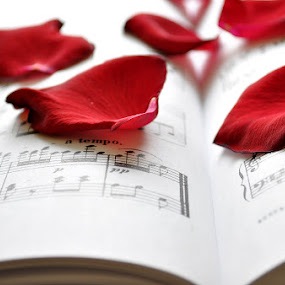 Notes and Roses by Nathan Cool - Artistic Objects Other Objects