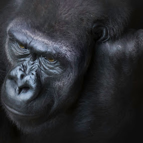 by William Underwood  - Animals Other Mammals (  )