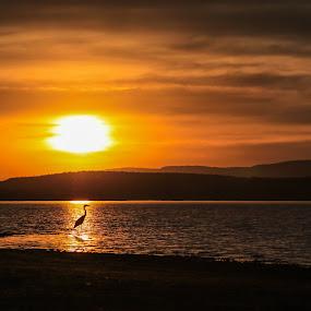 Sunset at Doorndraai Dam by Isak Meyer - Landscapes Sunsets & Sunrises