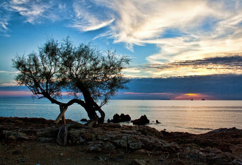 Tamerice solitaria al tramonto di Gianluca Presto