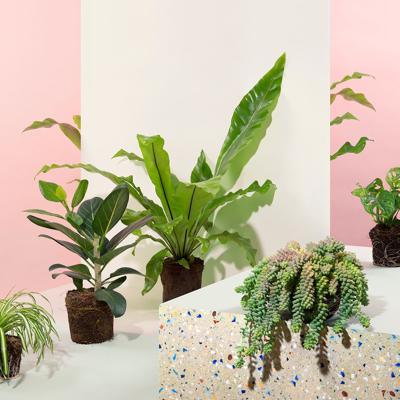 Bekijk hier de Kamerplanten Frisgroen