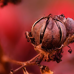 The Red World by Craig Turner - Nature Up Close Other plants ( close up, macro, around the house, closeup, stacking )