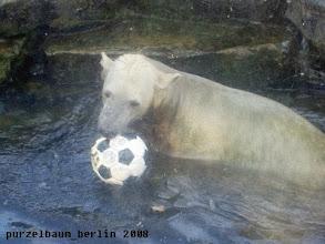 Photo: Knut schnappt sich dann doch lieber einen Ball ;-)