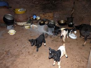 Photo: dans la pièce à tout faire : cuisiner, manger, dormir et les biquettes mangent les restes !