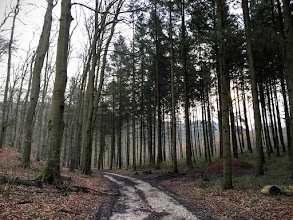 Photo: Bois de la Rochefoucault