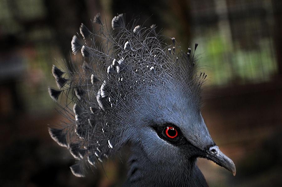 by Joel Mochammad - Animals Birds