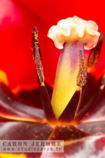 Pistule de fleur