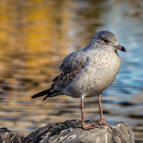 Bird on Rock by Rick Pelletier - Novices Only Wildlife