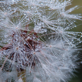 by Valentina Masten - Nature Up Close Other plants
